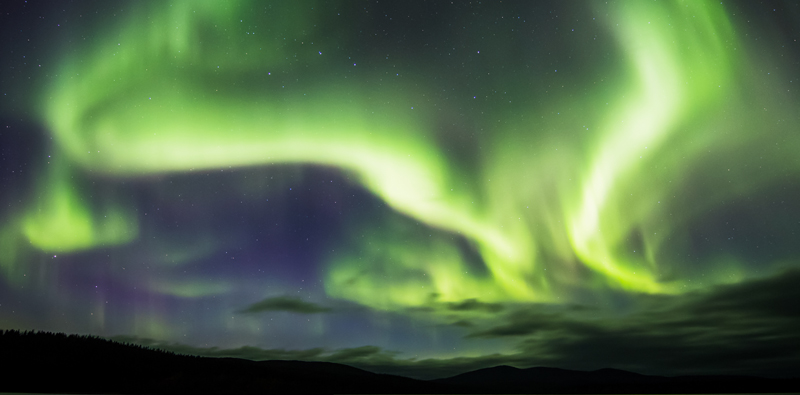 Green and white Northern lights in blue sky,  forest silhouette on the bottom.