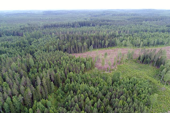 Flygfoto över en mångbruksskog i många åldrar.