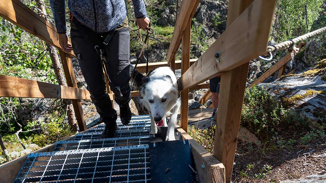 Retkeilijä nousee koiran kanssa metallisia portaita pitkin ylös. Portaissa puukaiteet.