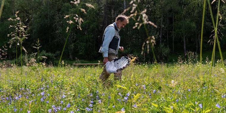 Ihminen kulkee haavi kädessä kukkivalla niityllä.