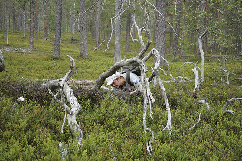 Nainen on kontallaan varvikossa ja tutkii keloutunutta maapuuta.