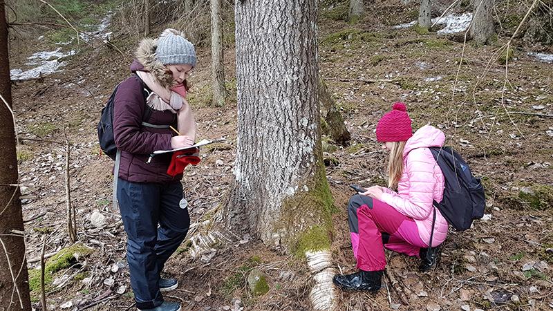 Kaksi ihmistä on tutkimassa liito-oravan papanoita puun juurella.
