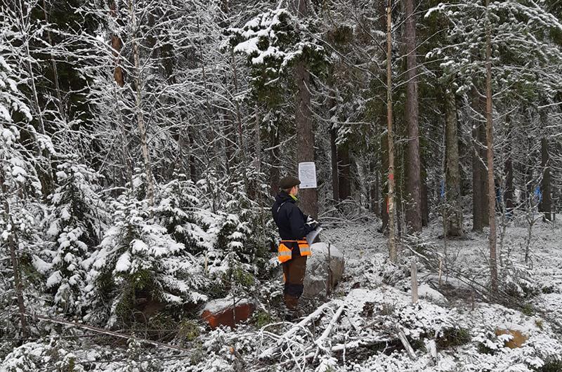 Suunnittelija Ossi Perälä merkkaamassa käsittelykohteita ja asettelemassa infotauluja Palovaaran lumisessa mesässä. Kuva Jussi Moilanen