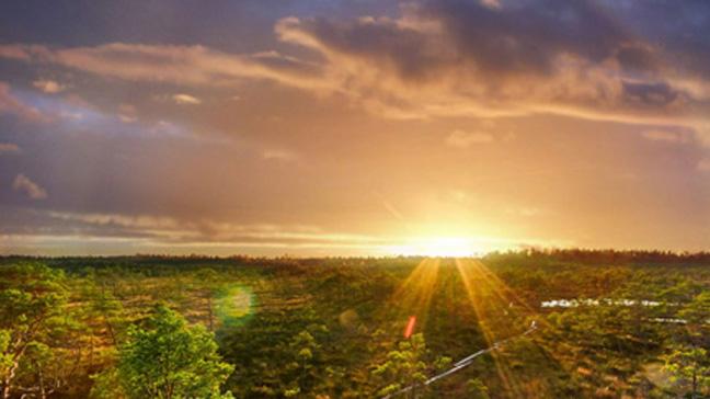 Aurinko Aegviidu-Korvemaan retkeilyalueella Virossa.