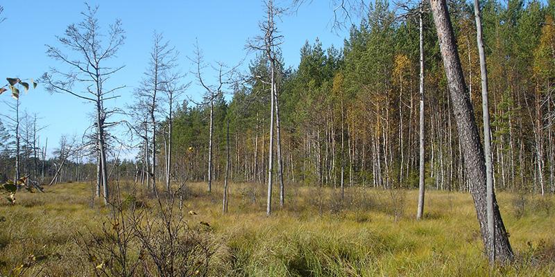 Maisema suolta. Pieniä puita kasvaa harvassa, maassa pitkää ruohoa.