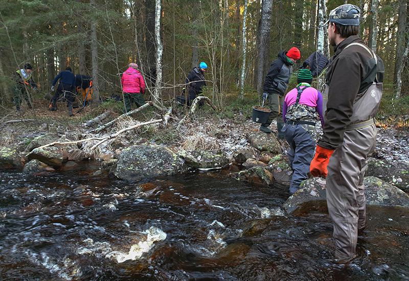 Ihmiset kuljettavat saaveilla soraa jokeen, joka virtaa etualalla.