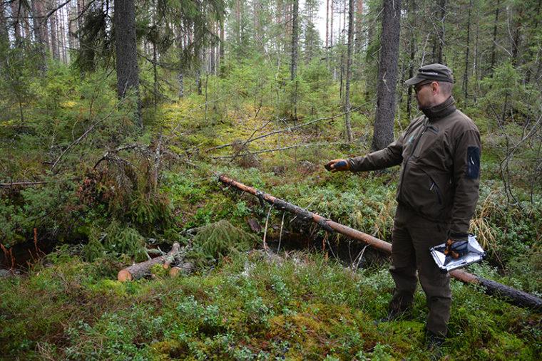 Suunnittelija Arto Nygren esittelee puroon siirrettyjä puita