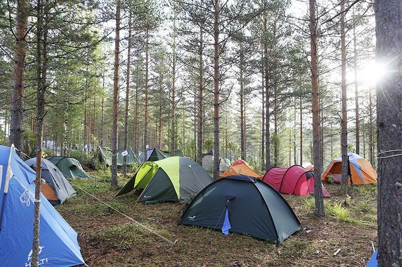 Useita telttoja harvassa mäntymetsässä puiden lomassa.