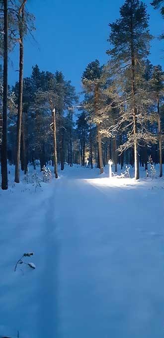 Talvinen metsä, jossa keskellä kulkee valaistu polku.