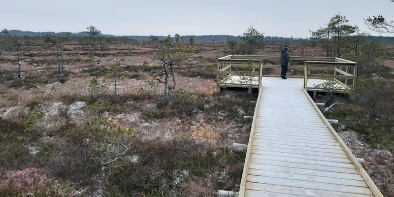 Lankuista tehty kulkutie ja sen päässä kaiteella varustettu levennys, missä seisoo ihminen ja katselee talvista suota, jossa kasvaa harvassa pieniä mäntyjä.