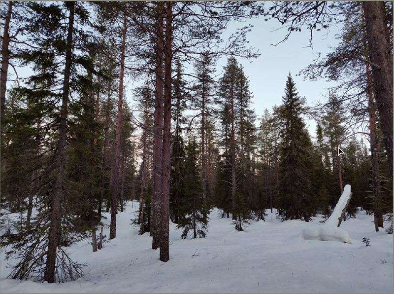 Talvista metsää Taivalkosken Kivilammelta. Kuva Markus Junttila