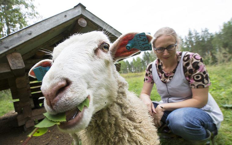 Ett får och en kvinna som tittar på fåret och ler.