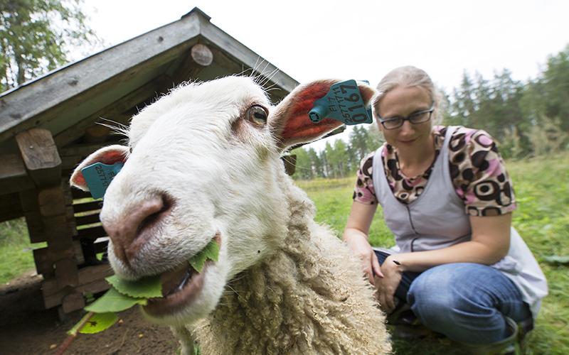 Lammas ja sen takana kyykyssä nainen katselee lammasta hymyillen.