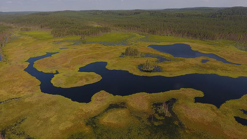 Ilmasta kuvattu puuton suo, jonka keskellä kiemurtelee joki, taustalla metsää.