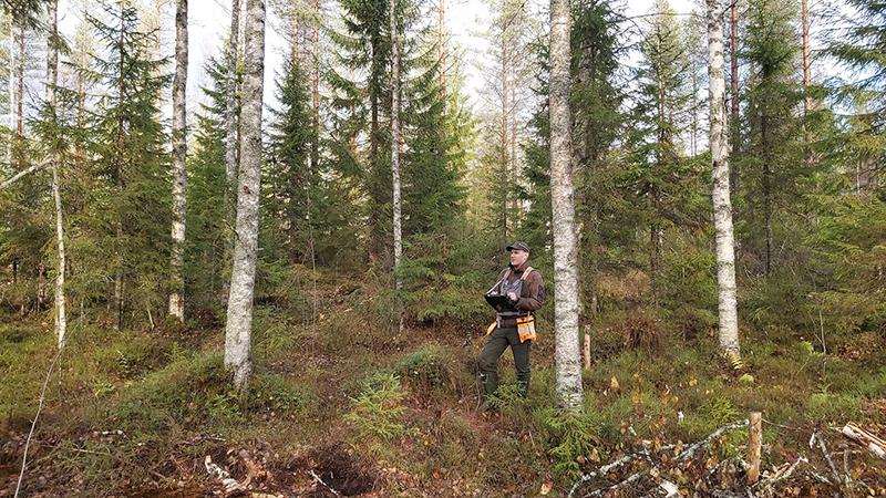 Suunnittelija Joonas Sorsa jatkuvan kasvatuksen havaintoalueella Rautavaarassa.