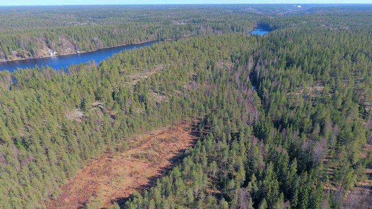 Suoalue metsän keskellä ilmasta kuvattuna, takana järvi.