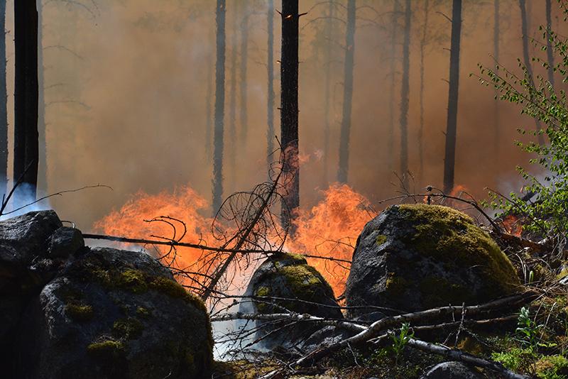 Luonnonhoidollinen poltto Evolla vuonna 2020. Kuva Keijo Kallunki