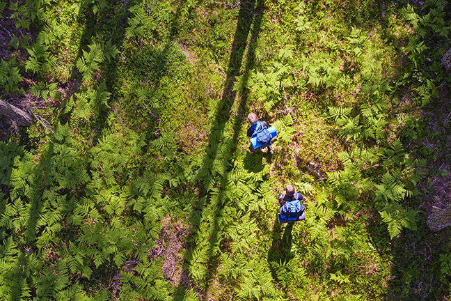 Hikers in a state multipurpose forest as seen from a bird's eye view. Photo: Mikko Törmänen