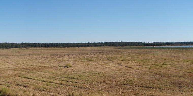 Etualalla suuri peltoalue, taustalla merenlahti.