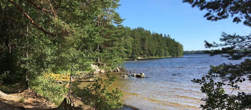 Kirkasvetisen Lohjan Vahermajärven ranta.