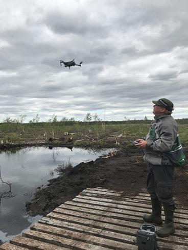 Mies seisoo lankkusillan päällä suolla ja ohjaa lentävää dronea.
