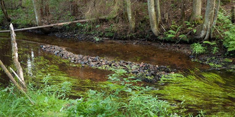 Metsässä virtaava puro, jonka keskellä on kivistä ja sorasta tehty, puron suuntainen matala harjanne.
