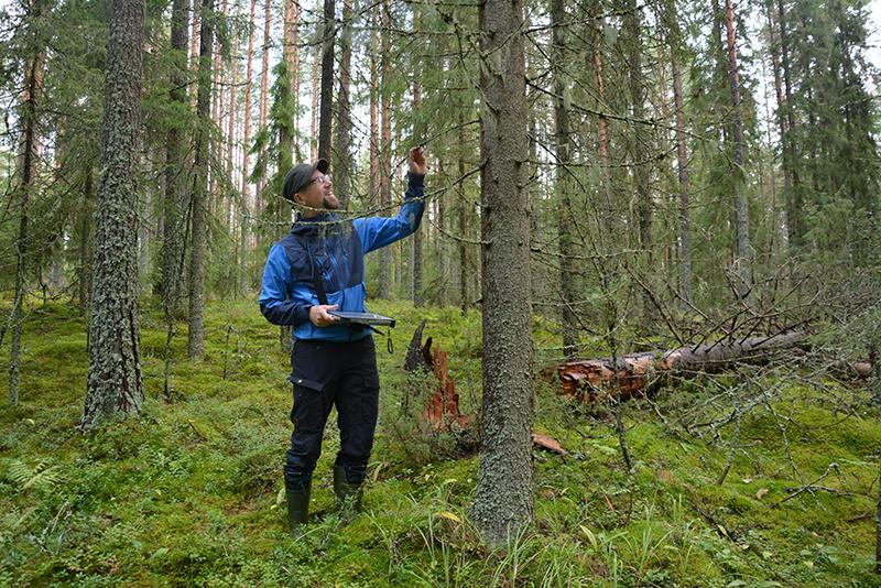 Tuomas Kallio kartoittamassa monikäyttömetsien lajitietoja syksyisessä metsässä.