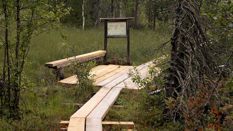 Lankuista tehdyt pitkospuut ja leveämpi kohta, missä penkki ja puukehyksessä infotaulu suolla pienen metsikön vieressä.
